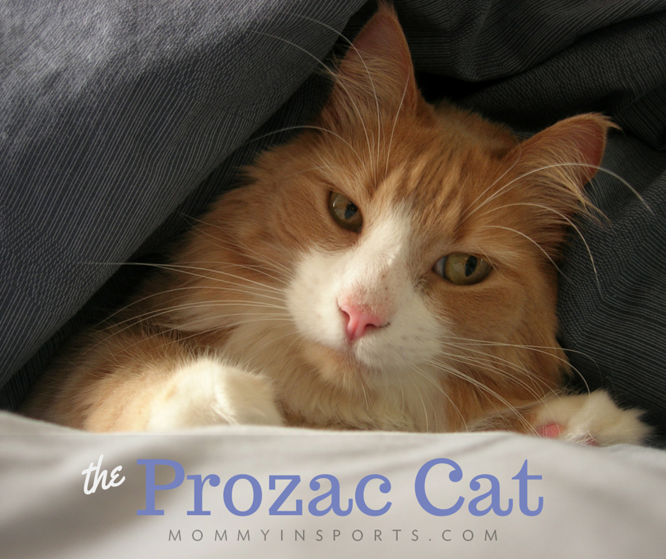 the prozac cat