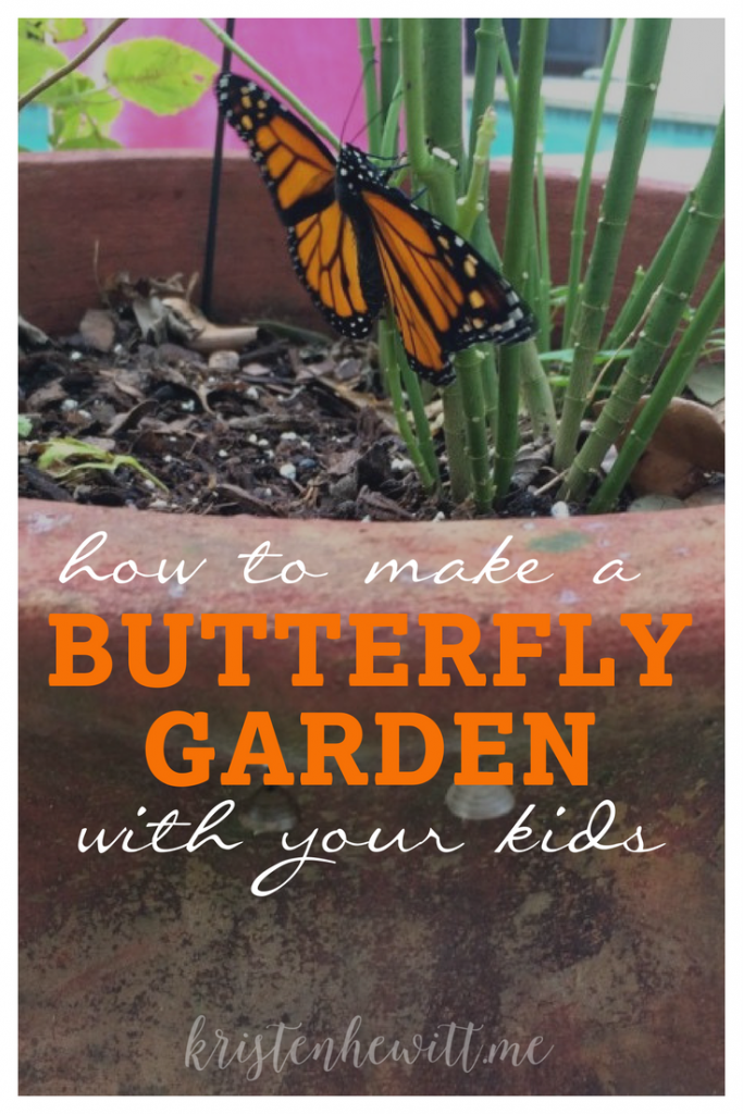 Looking to start a butterfly garden? Here's an easy way to teach the life cycle of a butterfly, and watch caterpillars turn to chrysalis', and then butterflies with your kids!
