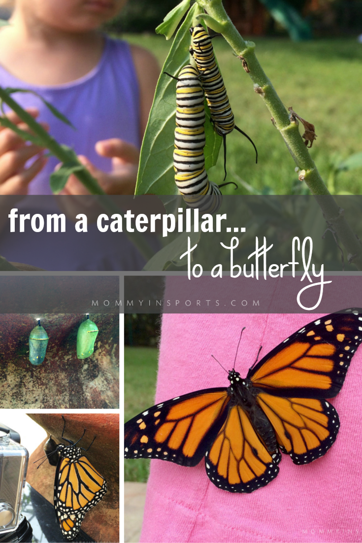 It's hard to believe we caught this footage live! A monarch caterpillar emerged from it's chrysalis while our Go Pro was filming! Check out the lifecycle of a butterfly through our pictures!