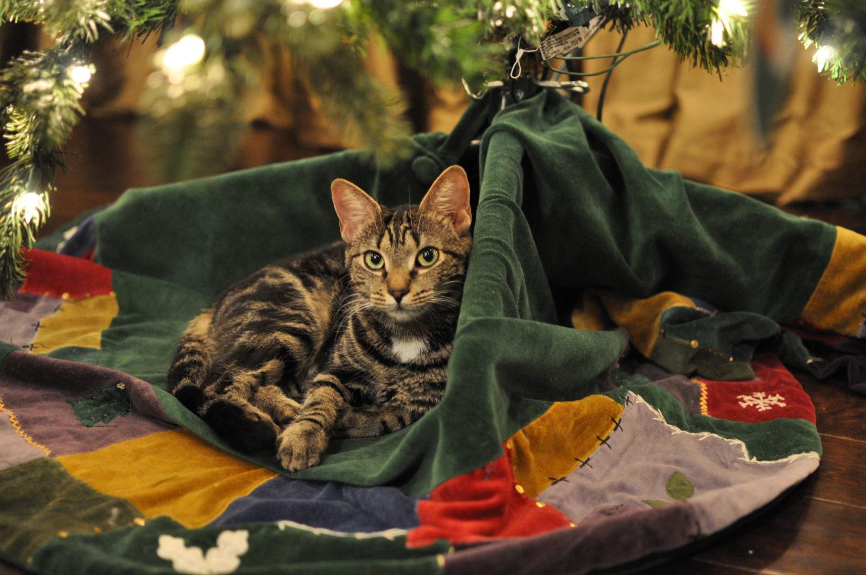 Stray Cat Kitten Care